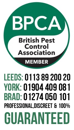 Wasp Nest Removal Leeds, Ilkley & Otley