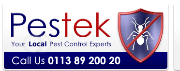 Pestek Pest Control are a professional wasp nest removal company in Leeds West Yorkshire.